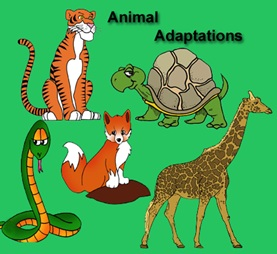adaptations clip art